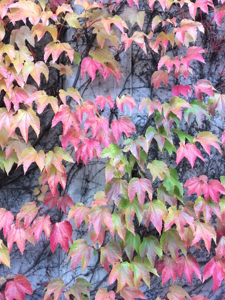 VisuSillvan _ autumn colours