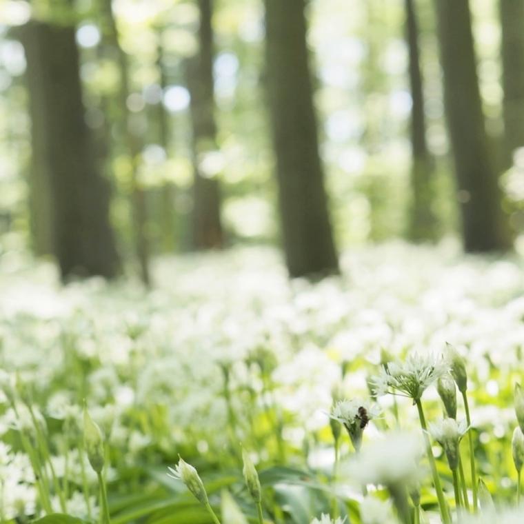 Riis Skov Ramsløg flowers